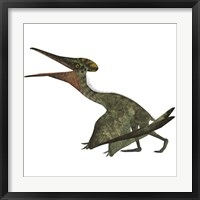 Framed Flying Pterodactylus  Reptile