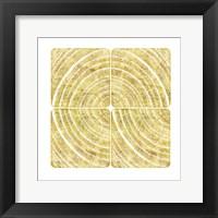 Framed Tree Ring Triptych I