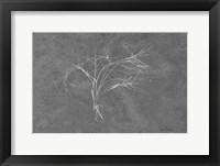 Framed Twiggy Algae Silver on Black