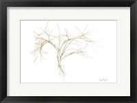 Framed Twiggy Algae Gold on White