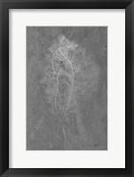 Framed Fern Algae Silver on Black