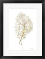 Framed Fern Algae Gold on White