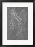 Framed Fern Algae Silver on Black 2