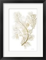 Framed Fern Algae Gold on White 2