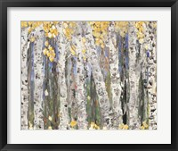 Framed Yellow Leaf Birch Trees