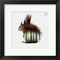 Framed Squirrel