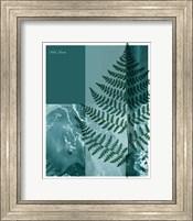 Framed Fern 2