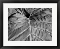 Framed Big Leaf 2