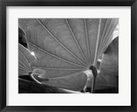 Framed Big Leaf