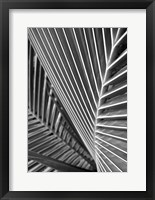 Framed Tropical Close Up 2