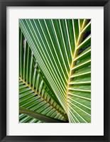 Framed Tropical Close Up