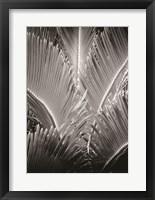 Framed Tropic Tree 3