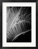 Framed Tropic Tree 2