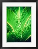 Framed Tropic Tree