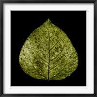 Framed Green Leaf