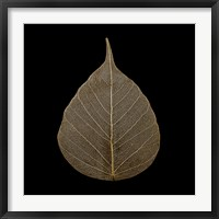 Framed Brown Leaf