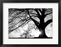 Framed Old Tree