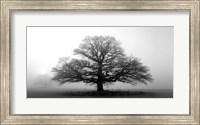 Framed Tree In The Mist