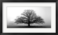 Framed Tree In The Mist