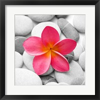 Framed Zen Flower