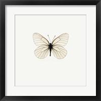 White Butterfly 2 Framed Print