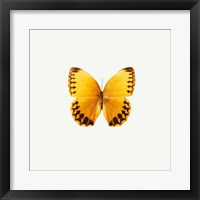 Yellow Butterfly 2 Framed Print