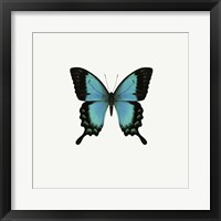 Framed Blue Butterfly