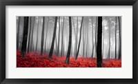 Framed Autumn Woods 2