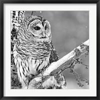 Framed White Owl