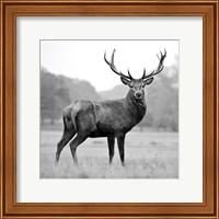Framed Proud Deer