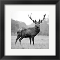 Framed Proud Deer
