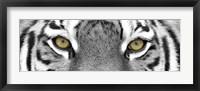 Framed Tiger Panel