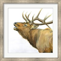 Framed Majestic Elk Brown Crop