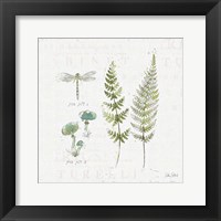 Framed In the Forest VI