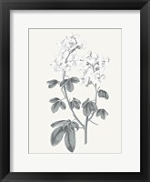Framed Neutral Botanical III