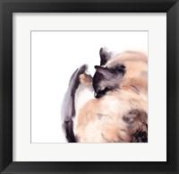 Framed Sleepy Siamese