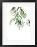 Framed Pine Leaves II