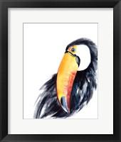 Framed Toucan