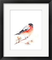 Framed Red Breasted II
