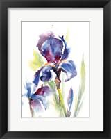 Framed Iris IV