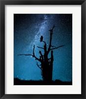 Framed Alone In The Dark