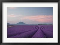 Framed Lavender Field