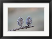 Framed Perfect Pair