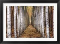 Framed Tree Farm