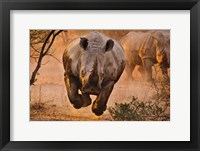 Framed Rhino Learning To Fly