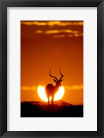 Framed Impala In The Sun