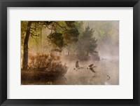 Framed Goose Fight