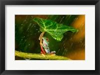 Framed Ohh Noo It's Raining