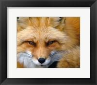 Framed Foxy Lady