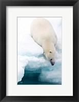 Framed Arctic Composition